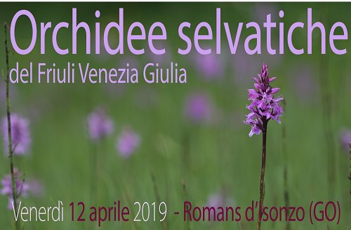 Banner_Orchidee_ROMANS_2019